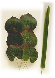 Picture for category Silk leaves